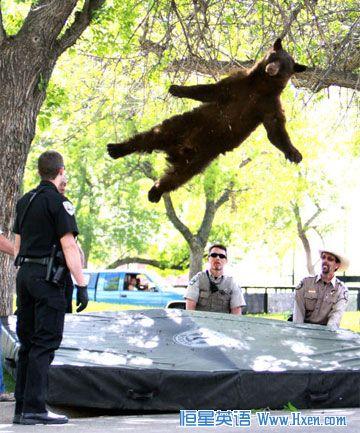 醉后坠落上演 空中飞熊图片