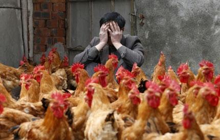 H7N9禽流感跨国界传播的忧虑