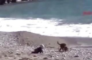 婴儿爬向海边险落水 小狗英勇挡道