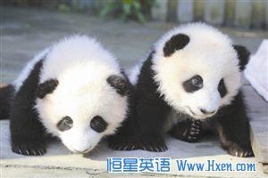 News Plus慢速英语:中国春节期间烟花燃放量减少 大熊猫双胞胎取名奥林匹亚和福娃