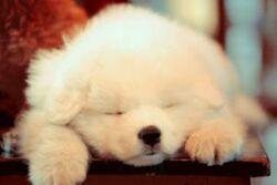 忠诚的狗 The Loyal Dog