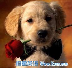 地道美语听力练习:寄养狗狗万般不舍