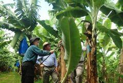 VOA常速英语:Strengthening Global Biosecurity(翻译)