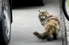 一只流浪猫 A Stray Cat