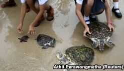 Thailand Celebrates King's Birthday by Releasing 1,066 Turtles