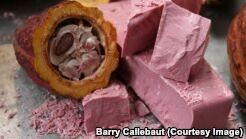 食物科学家研制出粉红色巧克力