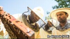 意大利为移民提供养蜂工作