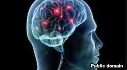 VOA慢速英语:专家研究大脑损伤与美式足球之间的联系