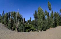 """中国打造""""绿色长城"""":沙漠里种树的惊人壮举"""