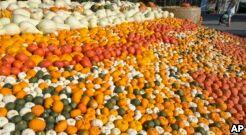 VOA慢速英语:南瓜的健康益处