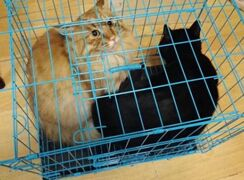 A Cat in the Cage 笼子里的猫