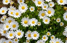 10种鲜花的英文名及含义,兰花的竟然这么污,不忍直视