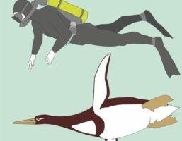 钱柜777官方网站:科学家发现古代的企鹅和人类一样大