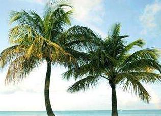 实战口语情景对话 第1075期:In the Tropics 热带地区