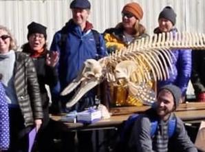 英语访谈节目:科学家通过海豚墓地了解搁浅海豚的生活