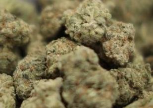 英语访谈节目:新联邦指南对大麻合法化提出质疑