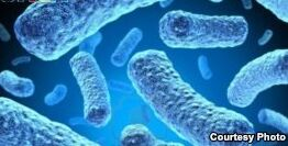 VOA慢速英语:维生素C有助于防治肺结核吗?