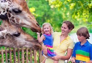实战口语情景对话 第1152期:Going to the Zoo 动物园