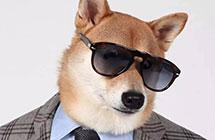 近几年,汉语中的狗文化好像变了