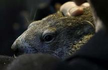 美国人为什么用土拨鼠来预测天气?