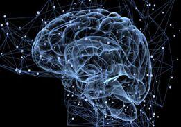 人类大脑记忆中心在13岁时就停止生长