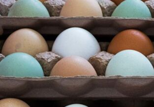 鸡蛋有红皮、白皮、绿皮,有什么区别?