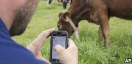 "VOA慢速英语:""智能农场""技术追踪奶牛行为"