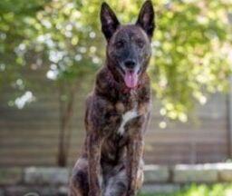 VOA慢速英语:美国战犬在国会大厦受表彰