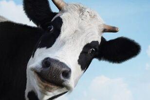 加州一科学家团队获得资金来研究奶牛放屁
