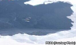 VOA慢速英语:北极濒危动物增加