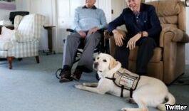 VOA慢速英语:为寻找濒危动物而训练的狗狗
