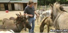 VOA慢速英语:驴子也能让人们放松