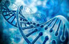 霍金生前最后担忧:超级富豪操纵DNA或毁灭人类