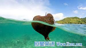 经济学人下载: 不会飞的甲壳虫如何海上航行