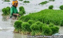 印尼粮食自给自足的目标仍在进行中