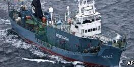 VOA慢速英语:日本将在2019年重新开始商业捕鲸活动
