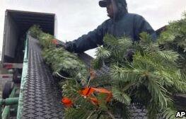 农民担心塑料圣诞树可能会取代真正的圣诞树