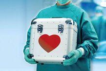 研究人员将测试给人移植猪皮  未来或无需人类捐献皮肤