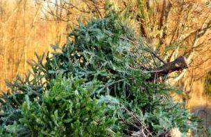 英语访谈节目:废弃的圣诞树怎么处理