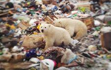 北极熊大举入侵俄罗斯群岛 吓得当地居民不敢出门