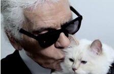 """""""老佛爷""""去世 他的爱猫能继承遗产吗?"""