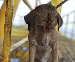 狗狗在离泰国海岸220公里的地方被发现后安全返回陆地