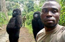 大猩猩与管理员的自拍照火了!原来我们可以这样相处