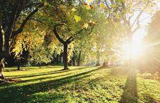 研究发现:城里的树长得快但死得早