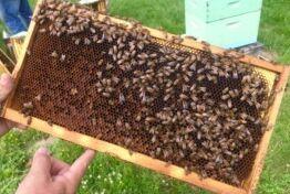 养蜂给西弗吉尼亚带来收入
