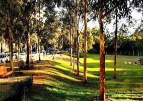 新研究:树对你的心理健康有好处,草没有