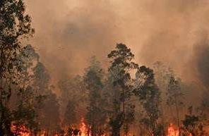 英语访谈节目:澳大利亚大火不容乐观