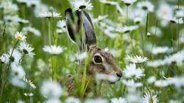 VOA慢速英语:词汇节目:龟兔赛跑