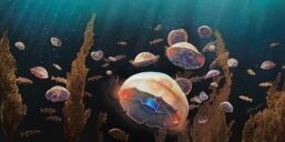 VOA慢速英语:科学家使水母生有的更快