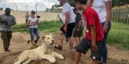 南非饲养者担心新的虐待动物准则
